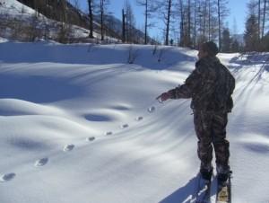 Маршрут учета ресурсов заповедника зимой
