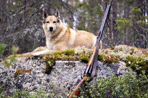 Охота на животных