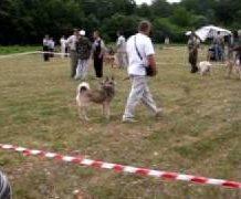 О Свердловской областной выставке собак