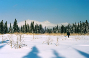 дорога в лесу зимой
