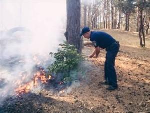 Пожары в лесу патрульные службы