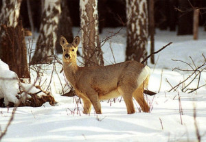 Результат зимнего сезона охоты
