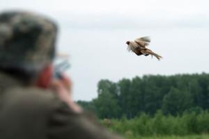 Нарушения правил охоты