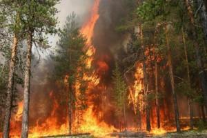 Пожар в лесах
