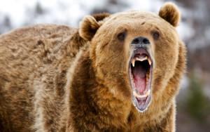 Медведи злые