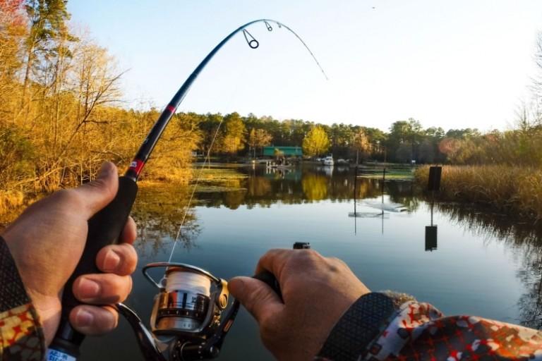 какую рыбу нельзя ловить в брянской области
