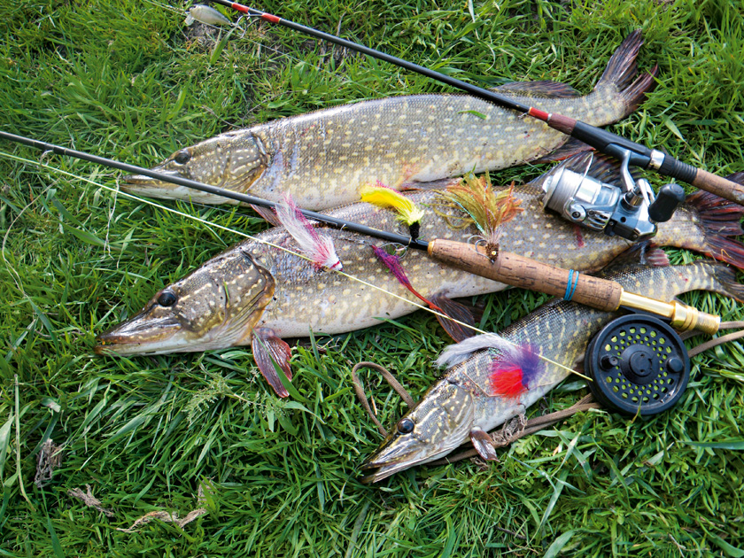 рыбалка купить в августе сентябре 2016
