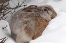 В Ростовской области не забывают про борьбу с браконьерами