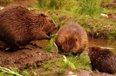 Вологодский комитет природных ресурсов огласил результаты пересчета животных