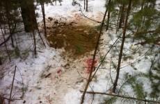 Браконьеры из Екатеринбурга убили беременную лосиху