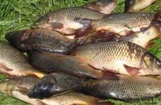 Изменения в законопроекте о любительской рыбалке